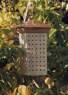 Mason Bee Nesting Block. By building this simple nest box, you can attract a gentle but prolific pollinator to your suburban yard and enjoy the fruits of its labor.