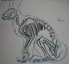 Hare skeleton by TheLionHearted on deviantART
