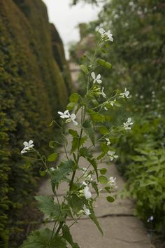Zone 5 Dry Shade Gardens: Growing Zone 5 Plants In Dry Shade   New Gardening  Know How Articles   Pinterest   Plants, Flowers And Gardens