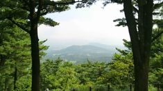 View from Halla Arboretum Jeju, South Korea