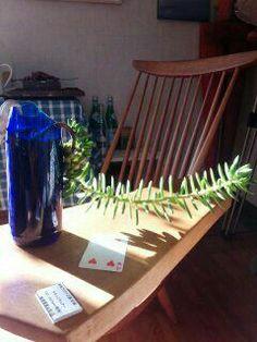 空き瓶に多肉植物を植える