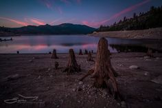 Army of Stumps by Ed Erglis on 500px