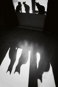 Shadow cats - http://goo.gl/WLoewL