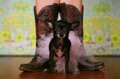 Studio M Houston, Photograph By Kacey Lowery -   Puppy - Charro Gamble   I love my baby.