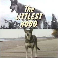 """Anyone remember the theme tune """"There's a voice, keeps on calling me, down the road that's where I'll always be ......."""" 🎶 1980s Tv Shows, Theme Tunes, The Voice, Husky, Dogs, Animals, Animales, Animaux, Pet Dogs"""