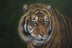 WATCHING , a Sumatran Tiger painting by Kathrin Guenther, painted in acrylics on board. 18 inch by 24 inch. Tiger Painting, Graphite Drawings, Wildlife Art, Art Paintings, Acrylics, Art Inspo, My Arts, Pets, Euro