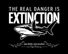 Stop finning you're destroying a large portion in the food chain