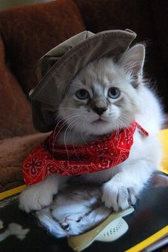 Cat in the hat ♥cowboy kitty