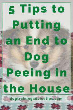 Basic Dog Training, Dog Potty, Dog Pee, Aggressive Dog, Dog Biscuits, Dog Behavior, Happy Dogs, Fun To Be One, Dog Owners