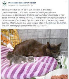 GEVONDEN in Hunzestraat #DenHelder moederpoes met kittens: pic.twitter.com/7ZG7nCRuZB