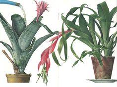 croquis plantes