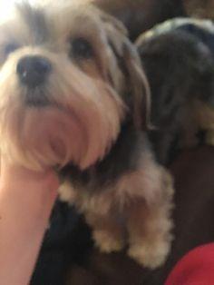 Found this stray dog in Oklahoma https://i.redd.it/msupkzyxhx901.jpg