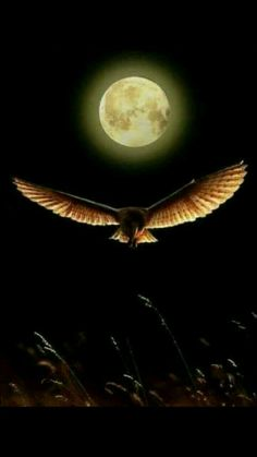 Science Discover Moon and she is frend Beautiful Moon Beautiful Birds Stars Night Moon Shadow Shoot The Moon Moon Photography Moonlight Photography Moon Magic Super Moon Beautiful Moon, Beautiful Birds, Beautiful Pictures, Moon Shadow, Stars Night, Aigle Animal, Luna Moon, Moon Photos, Full Moon Pictures