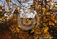 Showing The Blue Sky Shining Through Gold And Red R Leaves. Stock Photo - Image of background, colorful: 78843008 Red Leaves, Yellow Background, Red Gold, Sky, Colorful, Stock Photos, Seasons, Celestial, Image