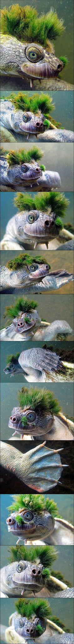 Moss turtle, and you thought you had a bad hair day. prob gonna have nightmares of this thing.