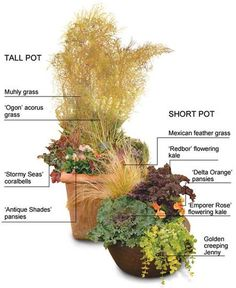 """Fresh Container Garden 'Recipes' For Fall...so want to make the """"short pot""""!"""