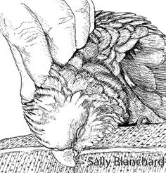 Sally Blanchard - Pen Drawing Double yellow-head Amazon Absolute pleasure!