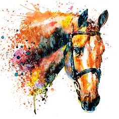 """Watercolor portrait of a colorful horse head.This artwork is featured in:""""Our Friends"""" Watercolor Horse, Watercolor Animals, Watercolor Portraits, Watercolor Paintings, Watercolors, Painted Horses, Framed Art Prints, Fine Art Prints, Canvas Prints"""