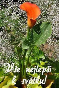 Emoji, Gifs, Anna, Plants, Fotografia, Majorca, The Emoji, Plant, Presents