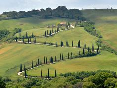 Walkabout Tours  The Best of Tuscany Tour - Siena, Chianti vineyard, San Gimignano, Pisa