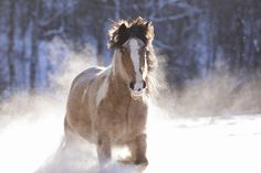 Horses In Snow, Pretty Horses, Winter Wonderland, Pinto Horses, Handsome, Heidi Klum, Photography, Animals, Painting