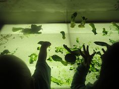 Exploring Bok-Choy on the light table-Little Wonders Blog
