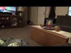 wild boy and his momma - YouTube
