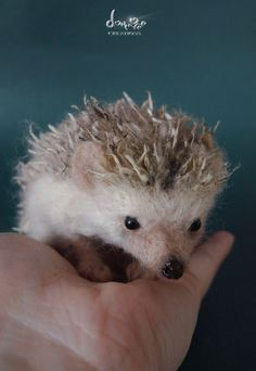 Needle Felted - Hedgehog 10 cm long size by dollmofee creations. $250.00, via Etsy.