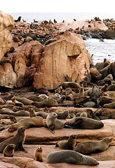 Isla de Lobos, Uruguay.  A natural reserve.  Go to www.YourTravelVideos.com or just click on photo for home videos and much more on sites like this.
