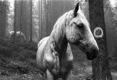 Horses in the woods.