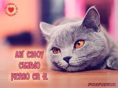 Related image Special Pictures, Animation, Cats, Animals, Image, Gatos, Animales, Animaux, Animal
