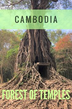 A little known UNESCO World Heritage Site in Cambodia. Sambor Prei Kuk has over 150 temples swallowed by trees. #Cambodia #travel #temples #UNESCO