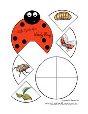 Science: Ladybug Life Cycle -- need to find exact link -- this only goes to main pageee Kindergarten Science, Science Classroom, Teaching Science, Science For Kids, Science Activities, Life Science, Sequencing Activities, Science Experience, Lap Book Templates