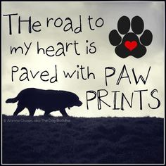 I LOVE dogs. I can't even express how much I love them. This would be the perfect tattoo for me. I'd get the quote in script with a trail of paw prints. Not sure on placement yet. Just an idea.