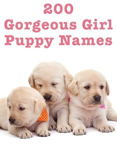Female Dog Names Female Puppy Names Unique, Girl Dog Names Unique, Puppies Names Female, Small Dog Names, Best Small Dogs, Best Dog Names, Labrador Names, Cute Labrador Puppies, Goldendoodle Names