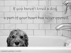 'Tis true. http://www.petwantsbigd.com/ #Dogs