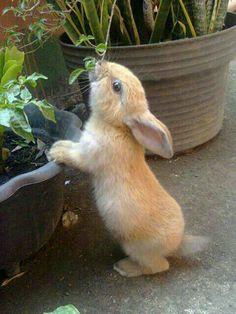 little sniffer!