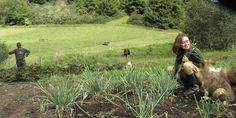 Neocampesinos, gente de ciudad que se muda al agro  Cada vez es más frecuente el éxodo de personas que cambian la vida de la urbe por la del campo.