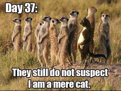 Animal Memes Of The Day – 52 Pics Lustige Tiermemes des Tages – 52 Bilder – Schöne Tierwelt Funny Animal Memes, Cute Funny Animals, Funny Animal Pictures, Funny Cute, Funny Photos, The Funny, Funny Memes, Funniest Pictures, Hilarious Pictures