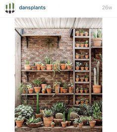 This looks wonderful  #dansplantsgiveaway @dansplants #dansplants #catusmagazine #crazyforsucculents #giveaway #gardenfun #lovesucculents #decorating #plants #awesome #happy #haveagoodone #goodluck