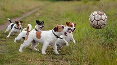 Need to make a Jack Russell happy? Take a look at these tips!