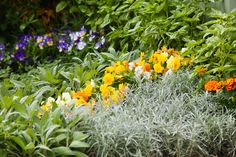Is your garden rather boring and bland? Does it need a lift? Well, never forget that all nurseries and…