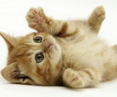 Just a cute kitty