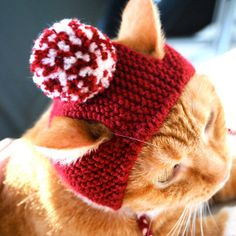 Include your cat in your Christmas (or Valentines) celebrations with a festive pom pom cat hat! This adorable cat costume / cat hat was made with Chat Crochet, Crochet Hats, Crazy Cat Lady, Crazy Cats, I Love Cats, Cute Cats, Funny Cats, Knitted Cat, Cat Hat