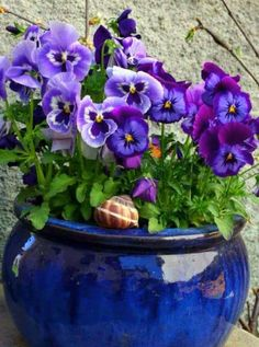 Pansies- quite possibly my favorite flowers! Arrangements Ikebana, Flower Arrangements, Container Plants, Container Gardening, Deco Nature, Winter Plants, Garden Planters, Pansies, Daffodils