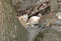 Ohkunoshima,rabbit island,in Japan