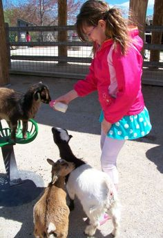 {Fun on the Farm} Great resources to help you find working farms and farmsteads to visit.  Kids will love learning about farm animals and how their food is grown.