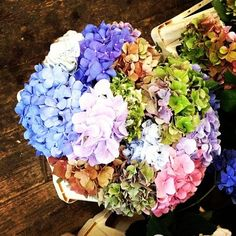 Love!!! Multi-color hydrangeas from a cool boutique florist in Strasbourg, Alsace