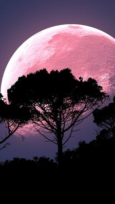 Moon, tree, photoshop, night, full moon, planet wallpaper