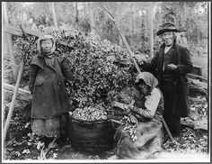 [Three Siwash Indian hop pickers posed with hops, Snoqualmie, Washington]